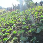 progetto orto comunitario hermana tierra onlus portici Associazione di volontari laici e cristiani operante in Guatemala